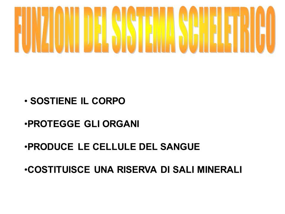 FUNZIONI DEL SISTEMA SCHELETRICO