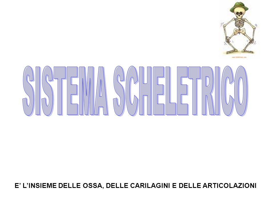 SISTEMA SCHELETRICO E' L'INSIEME DELLE OSSA, DELLE CARILAGINI E DELLE ARTICOLAZIONI