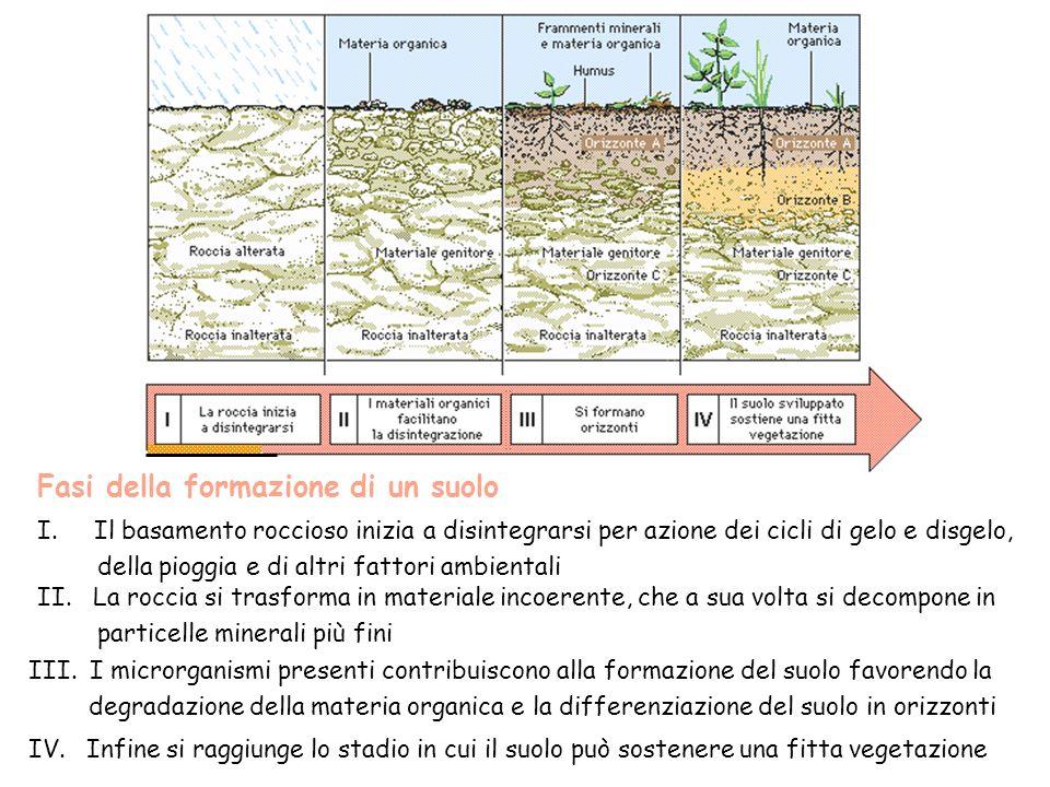 Fasi della formazione di un suolo