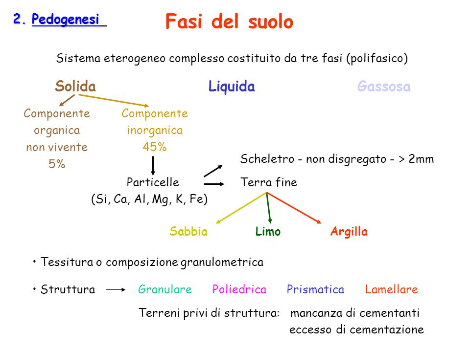 Fasi del suolo Solida Liquida Gassosa 2. Pedogenesi