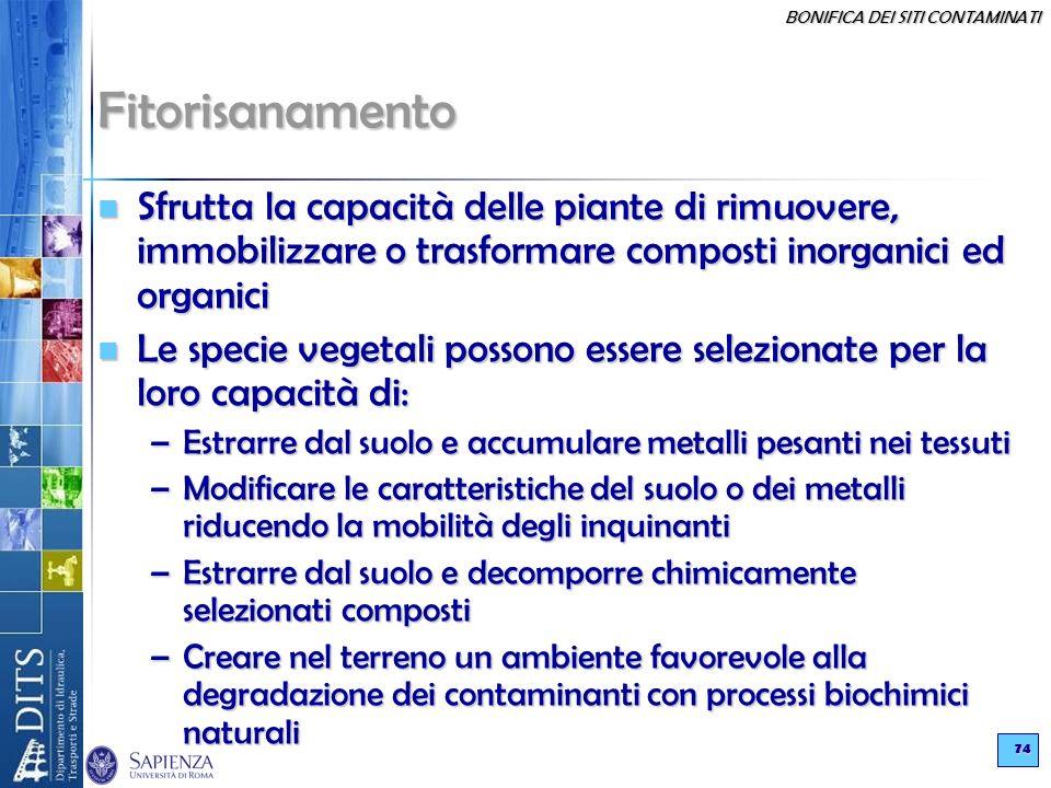 Fitorisanamento Sfrutta la capacità delle piante di rimuovere, immobilizzare o trasformare composti inorganici ed organici.