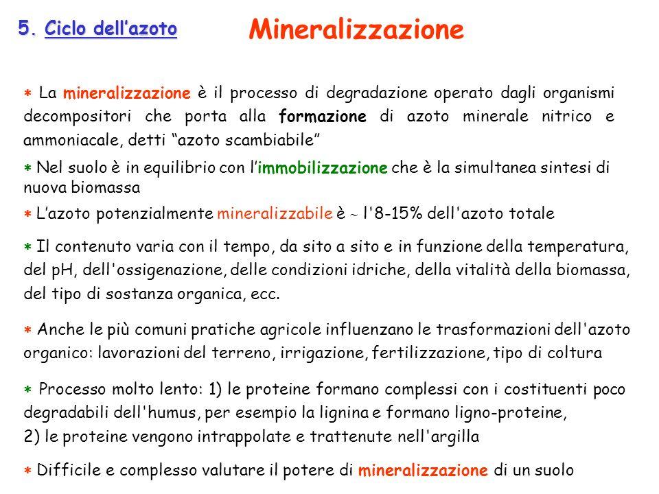 Mineralizzazione 5. Ciclo dell'azoto