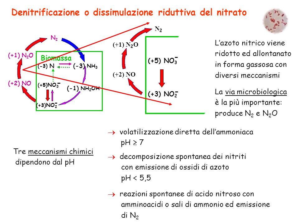 Denitrificazione o dissimulazione riduttiva del nitrato