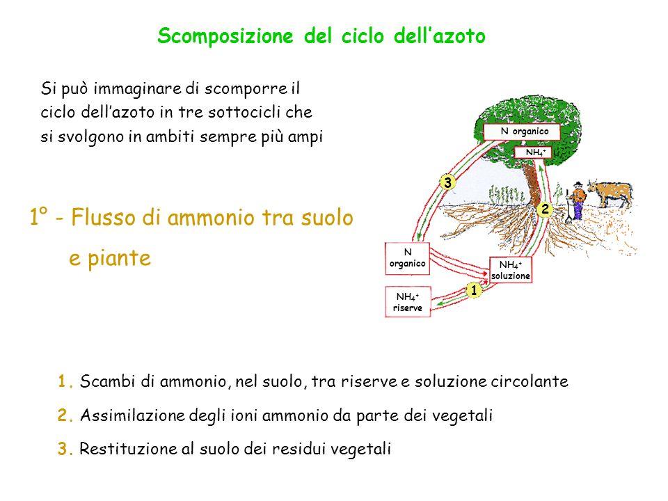1° - Flusso di ammonio tra suolo e piante