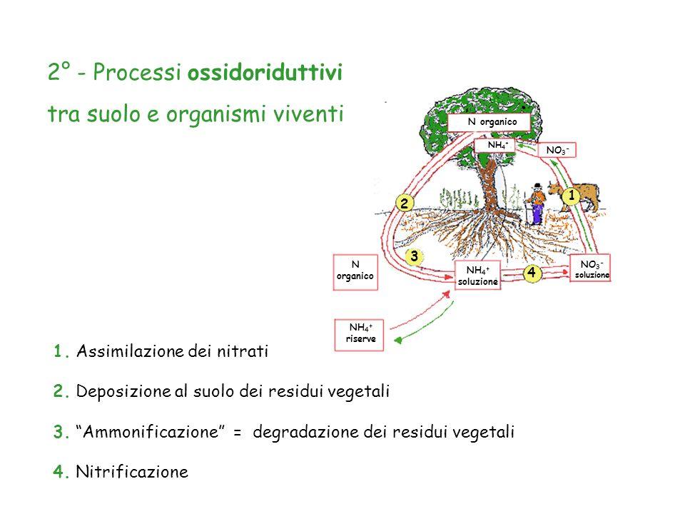2° - Processi ossidoriduttivi tra suolo e organismi viventi