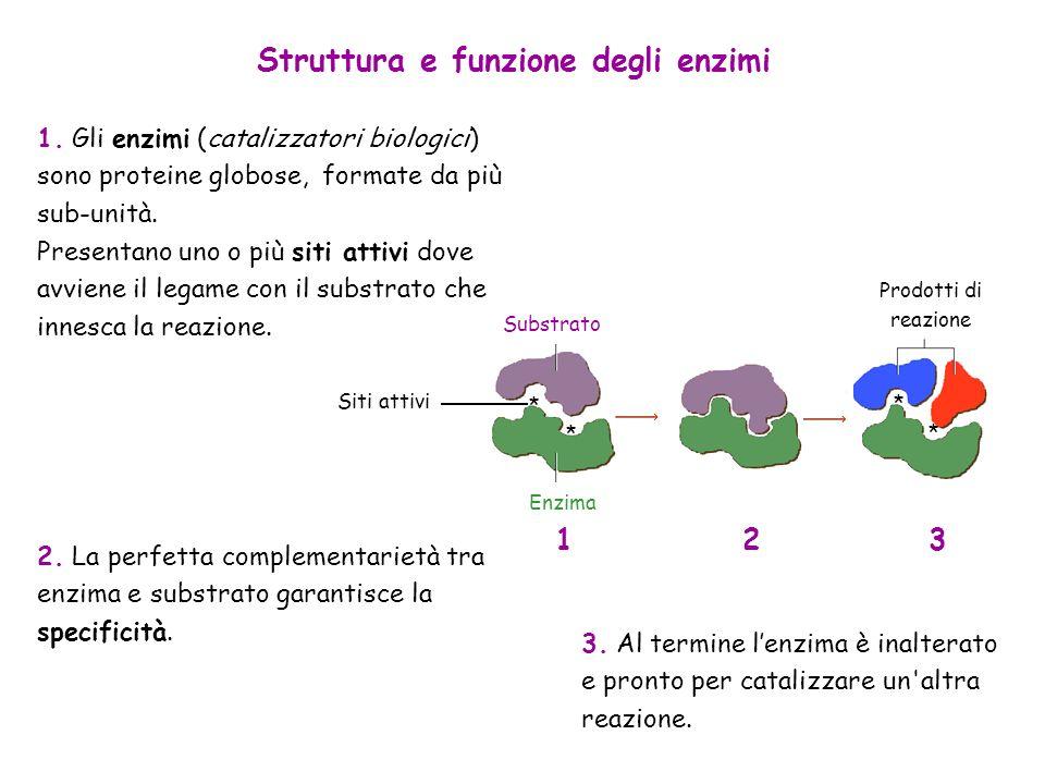 Struttura e funzione degli enzimi