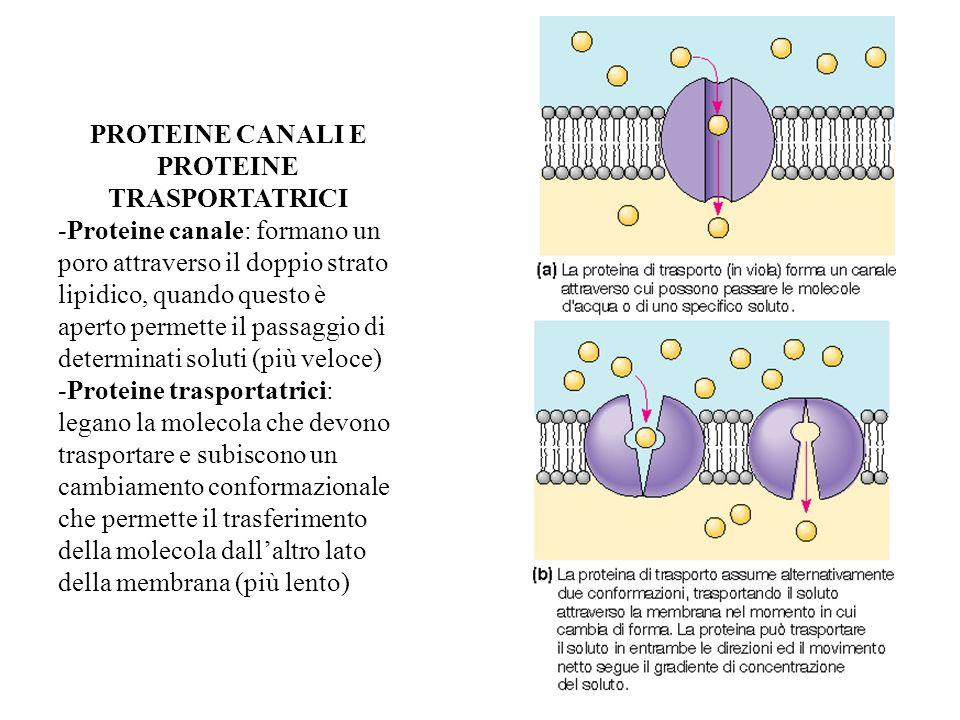 PROTEINE CANALI E PROTEINE TRASPORTATRICI