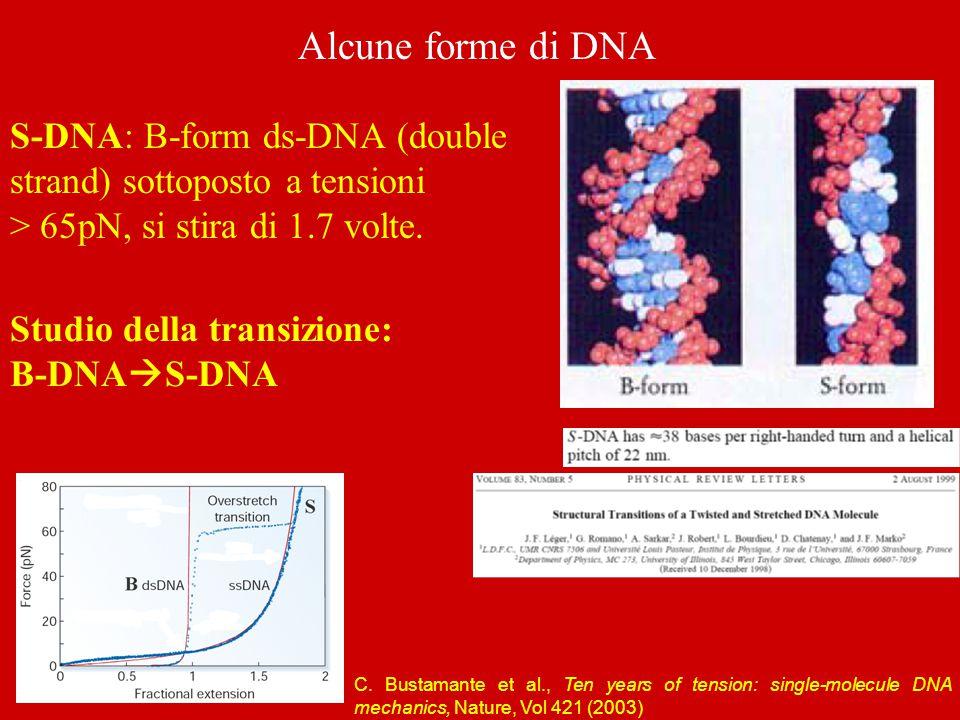 Alcune forme di DNA S-DNA: B-form ds-DNA (double strand) sottoposto a tensioni > 65pN, si stira di 1.7 volte.