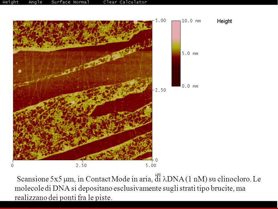 Scansione 5x5 m, in Contact Mode in aria, di DNA (1 nM) su clinocloro.