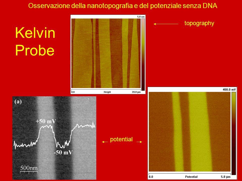 Osservazione della nanotopografia e del potenziale senza DNA