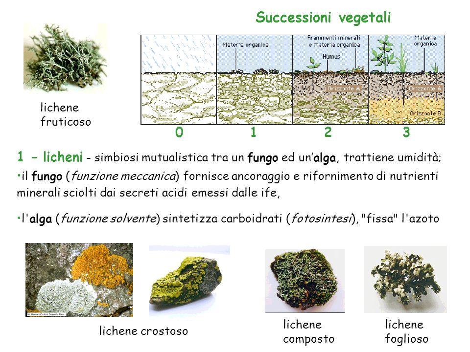 Successioni vegetalilichene fruticoso. 1. 2. 3. 1 - licheni - simbiosi mutualistica tra un fungo ed un'alga, trattiene umidità;