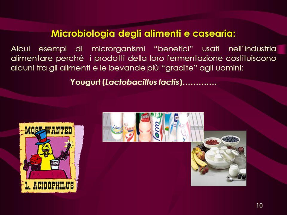 Yougurt (Lactobacillus lactis)………….