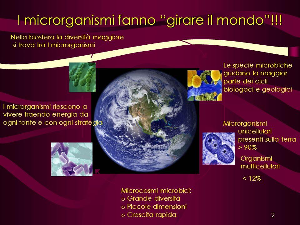 I microrganismi fanno girare il mondo !!!