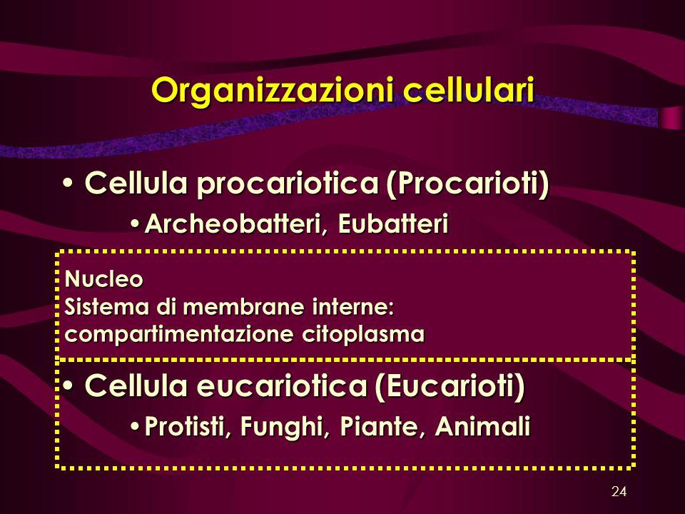 Organizzazioni cellulari