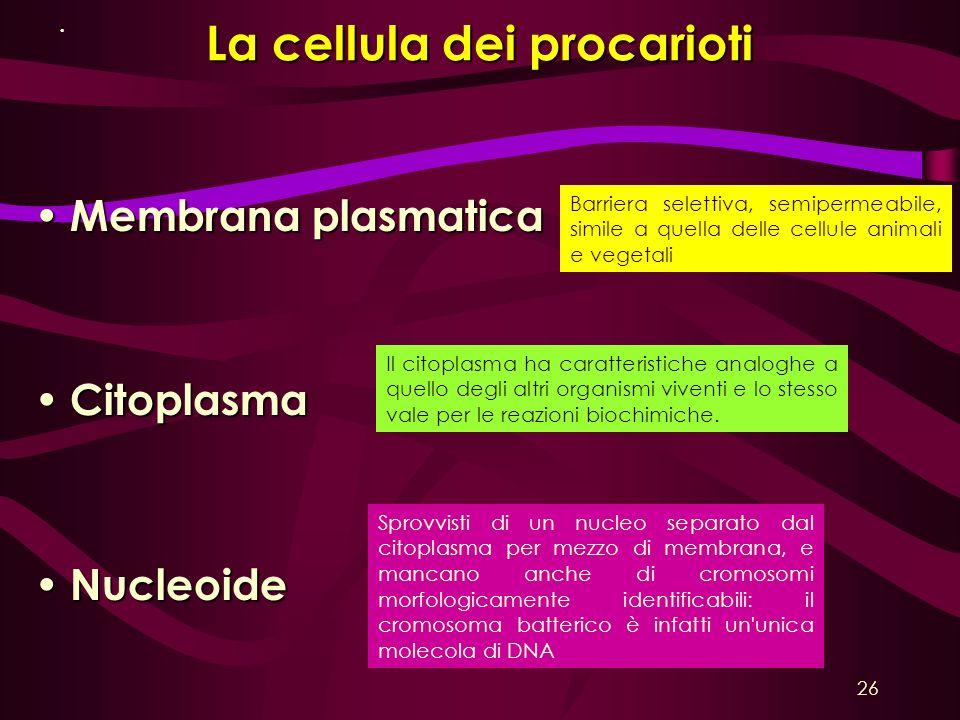 La cellula dei procarioti