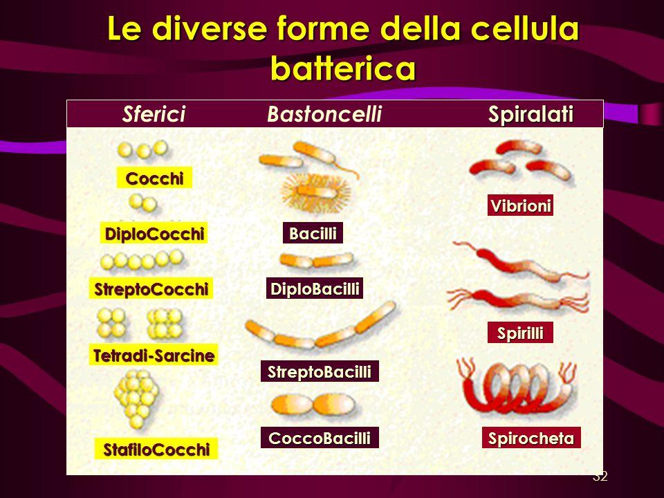 Le diverse forme della cellula batterica