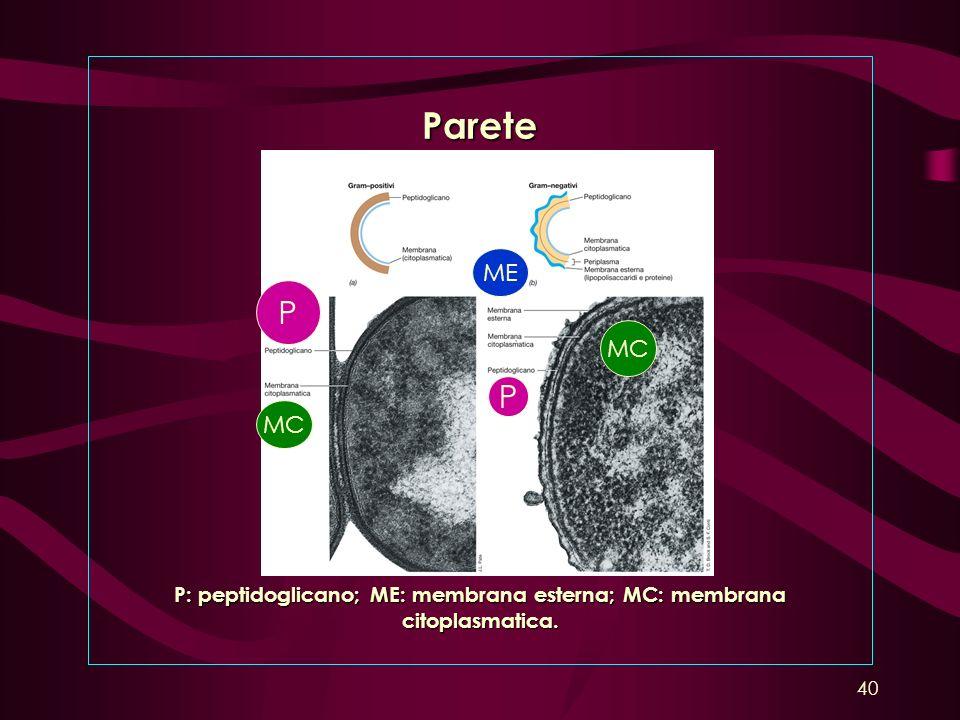 P: peptidoglicano; ME: membrana esterna; MC: membrana citoplasmatica.