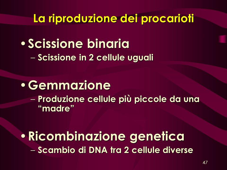 La riproduzione dei procarioti