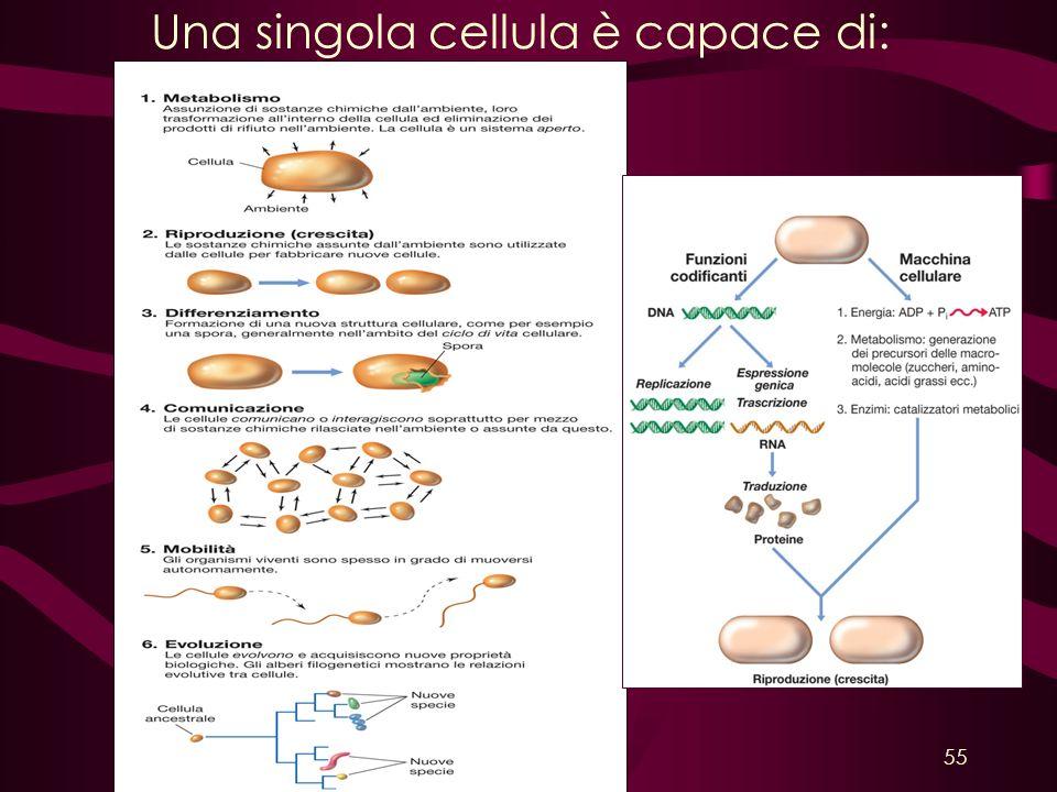 Una singola cellula è capace di:
