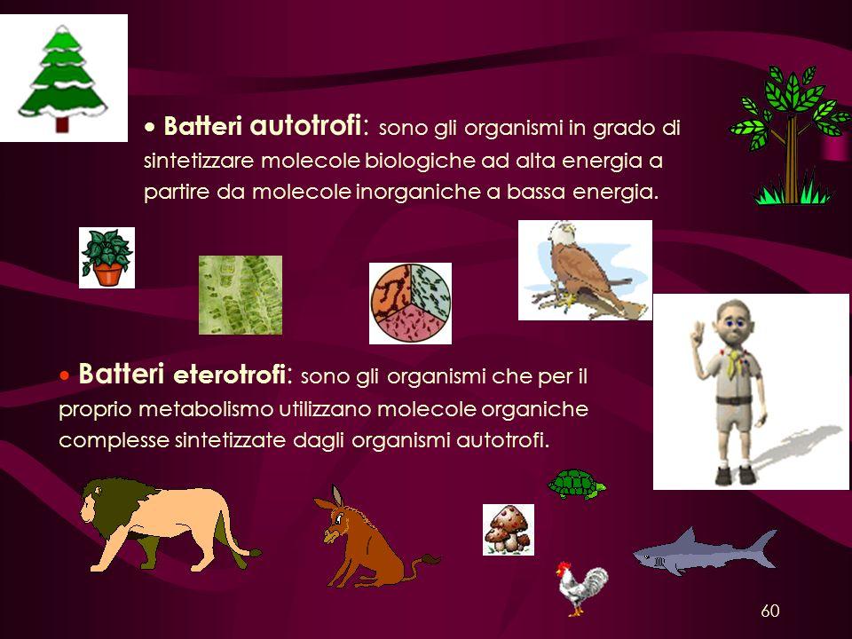 Batteri autotrofi: sono gli organismi in grado di sintetizzare molecole biologiche ad alta energia a partire da molecole inorganiche a bassa energia.