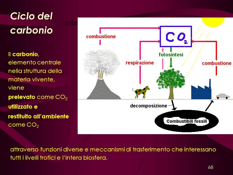 Ciclo del carbonio Il carbonio, elemento centrale