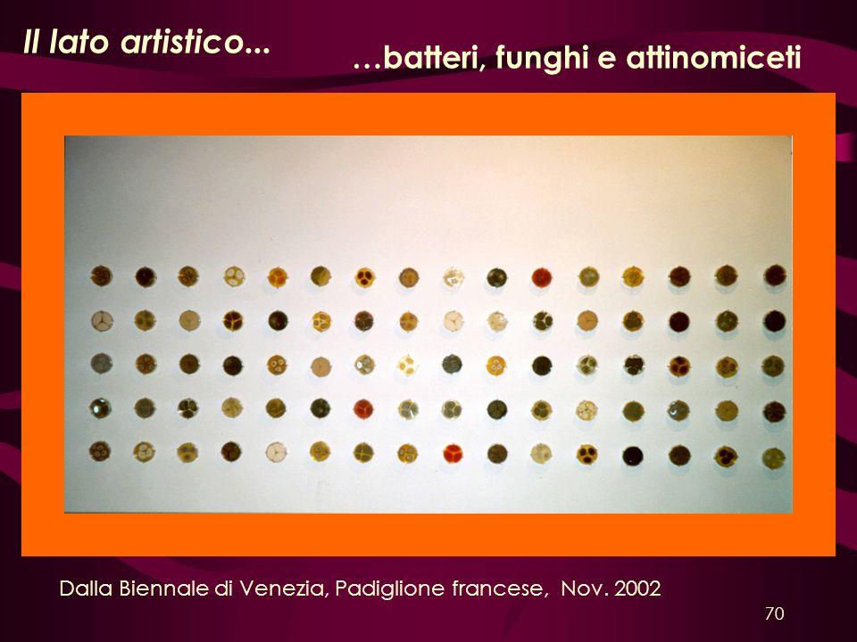 Il lato artistico... …batteri, funghi e attinomiceti