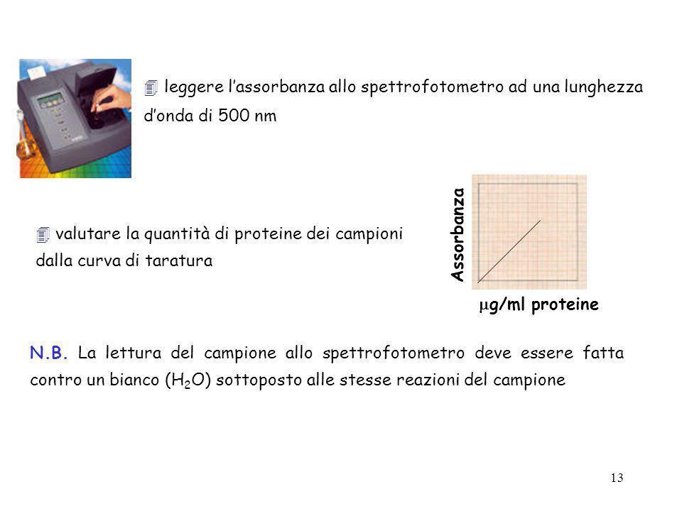  leggere l'assorbanza allo spettrofotometro ad una lunghezza d'onda di 500 nm