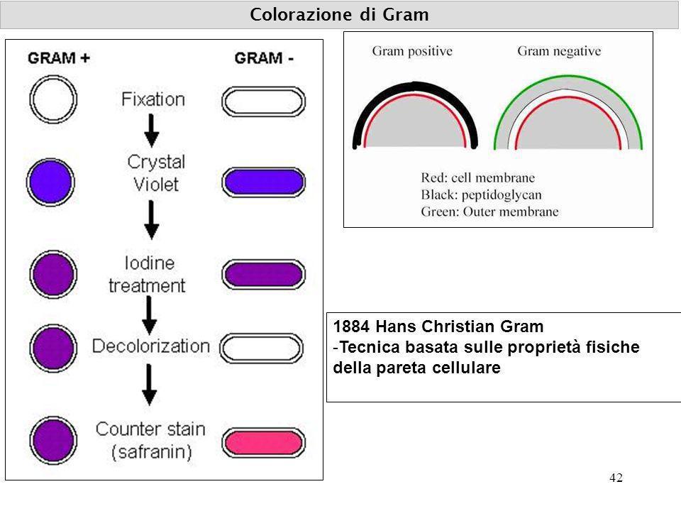 Colorazione di Gram 1884 Hans Christian Gram.