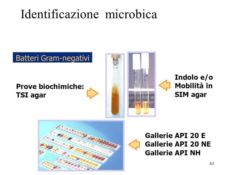 Identificazione microbica