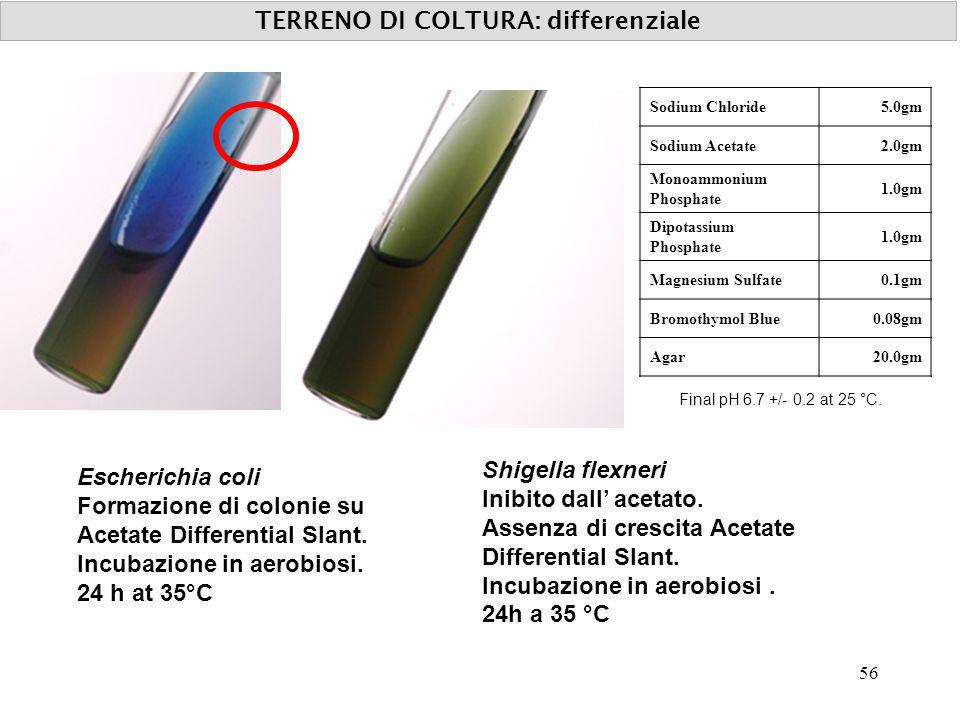 TERRENO DI COLTURA: differenziale