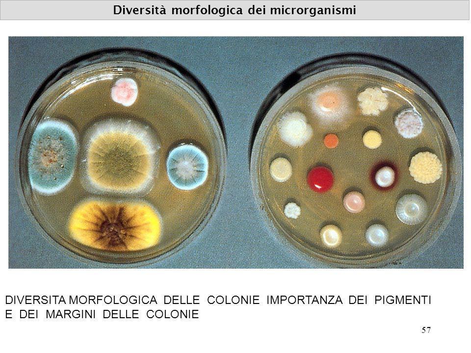 Diversità morfologica dei microrganismi