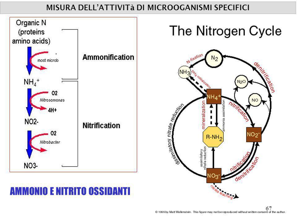 MISURA DELL'ATTIVITà DI MICROOGANISMI SPECIFICI