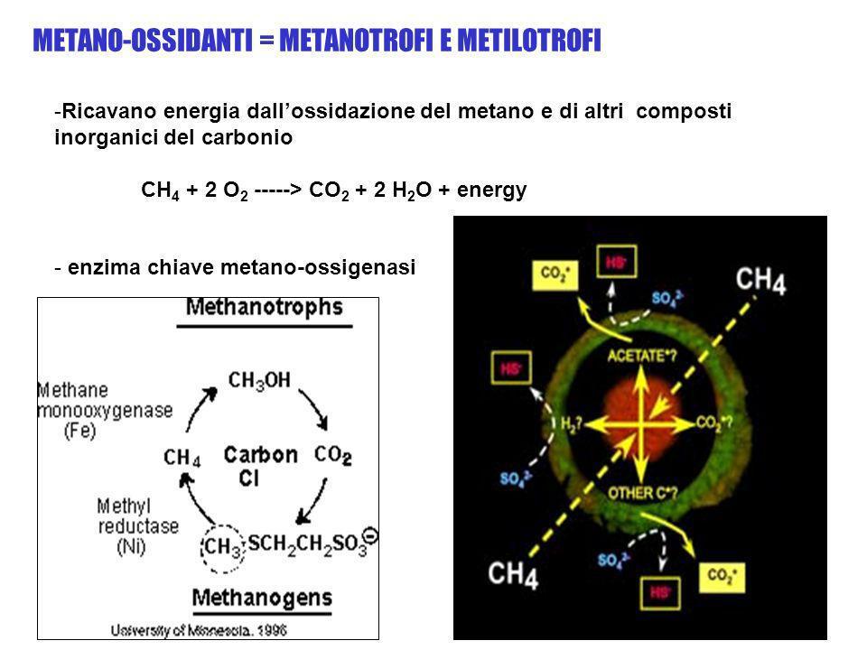 METANO-OSSIDANTI = METANOTROFI E METILOTROFI
