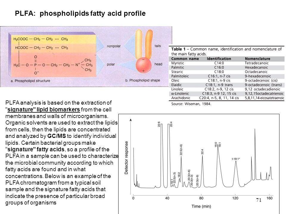 PLFA: phospholipids fatty acid profile