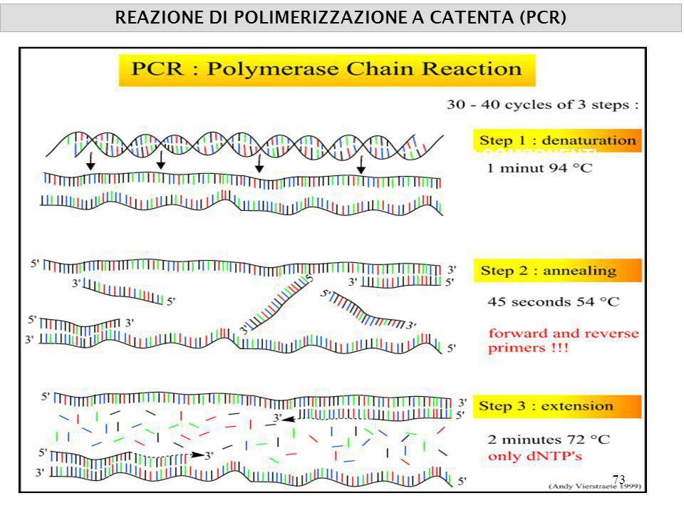 REAZIONE DI POLIMERIZZAZIONE A CATENTA (PCR)