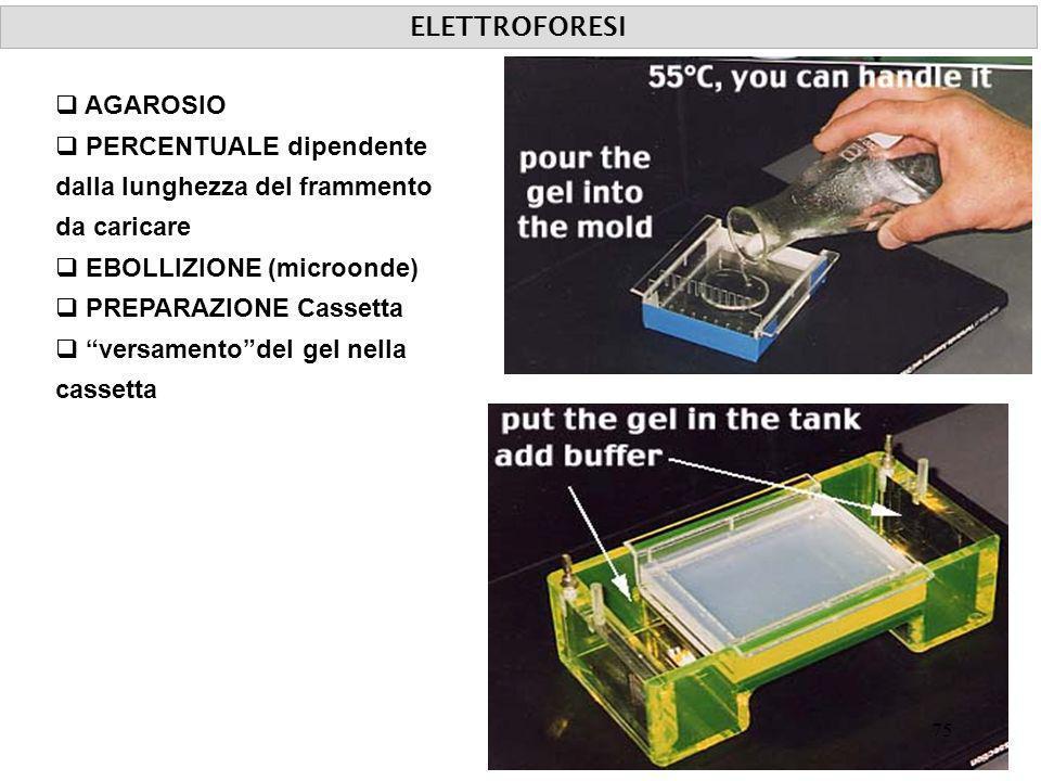ELETTROFORESI AGAROSIO. PERCENTUALE dipendente dalla lunghezza del frammento da caricare. EBOLLIZIONE (microonde)
