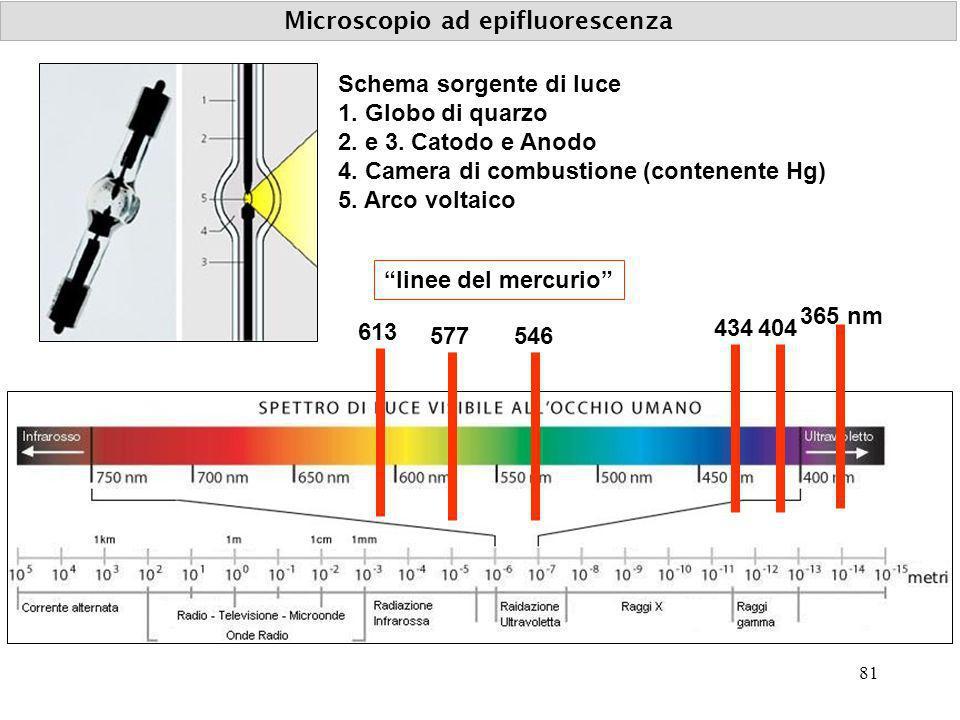 Microscopio ad epifluorescenza