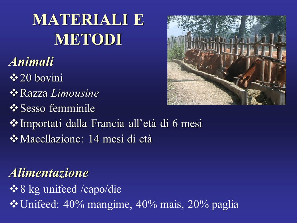 MATERIALI E METODI Animali Alimentazione 20 bovini Razza Limousine