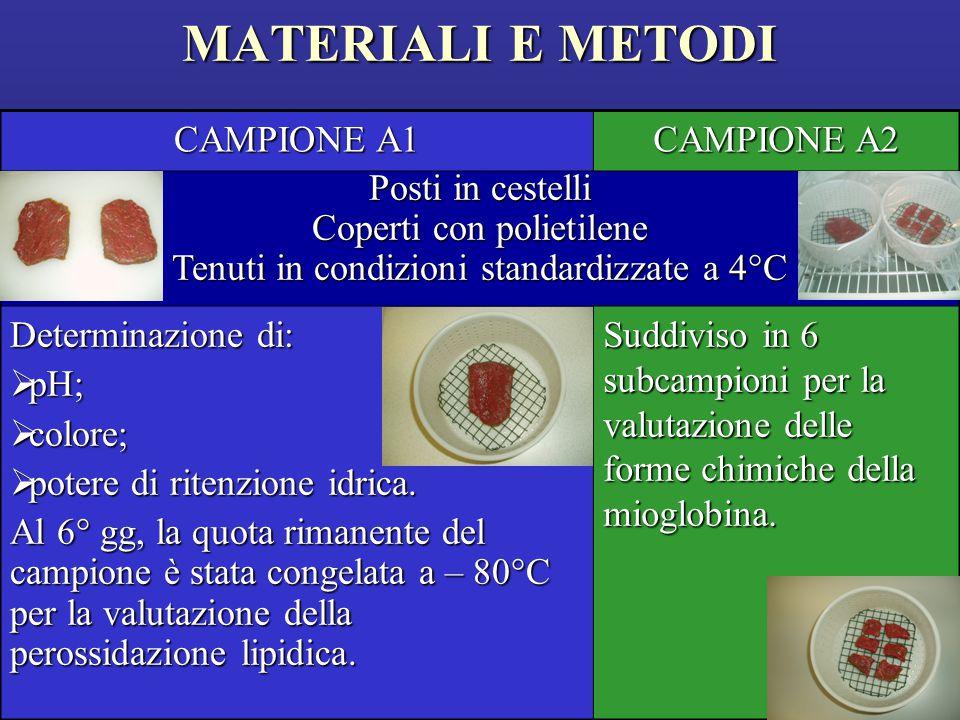 MATERIALI E METODI CAMPIONE A1 CAMPIONE A2 Posti in cestelli