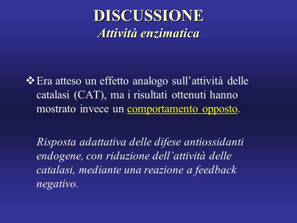 DISCUSSIONE Attività enzimatica