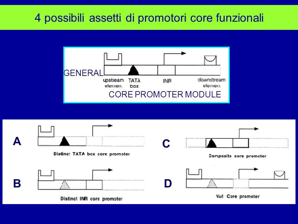 4 possibili assetti di promotori core funzionali