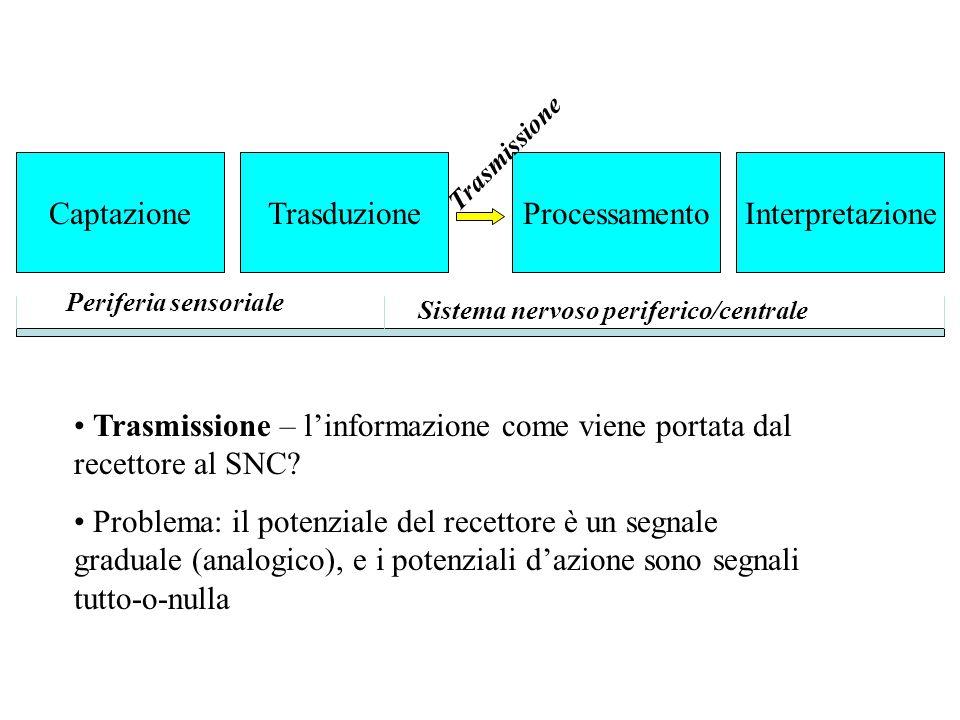 Trasmissione – l'informazione come viene portata dal recettore al SNC