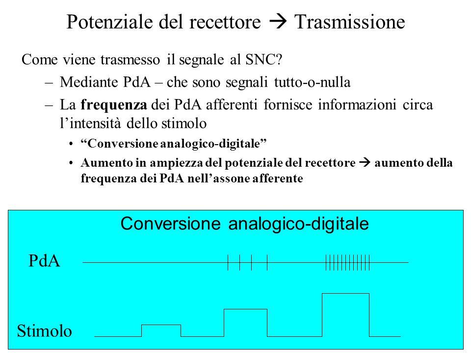 Potenziale del recettore  Trasmissione