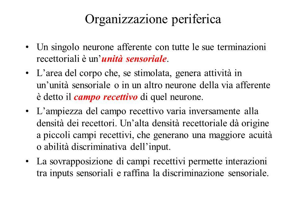 Organizzazione periferica