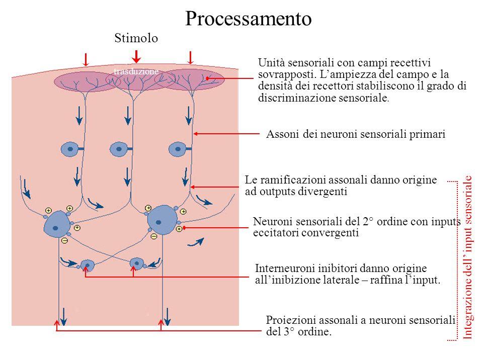 Processamento Stimolo