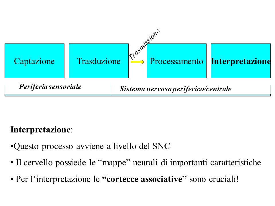 Questo processo avviene a livello del SNC