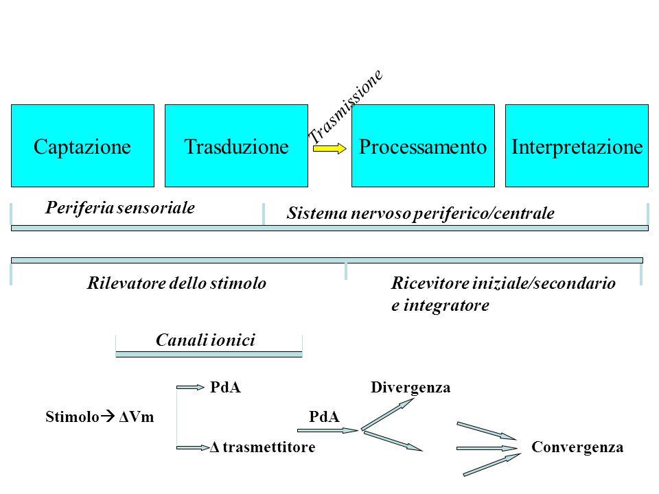 Captazione Trasduzione Processamento Interpretazione Trasmissione