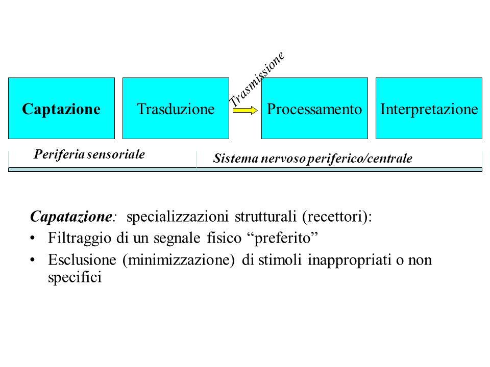 Capatazione: specializzazioni strutturali (recettori):