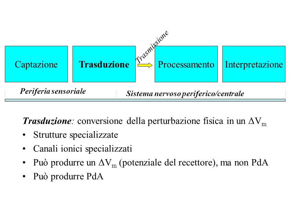 Trasduzione: conversione della perturbazione fisica in un ΔVm