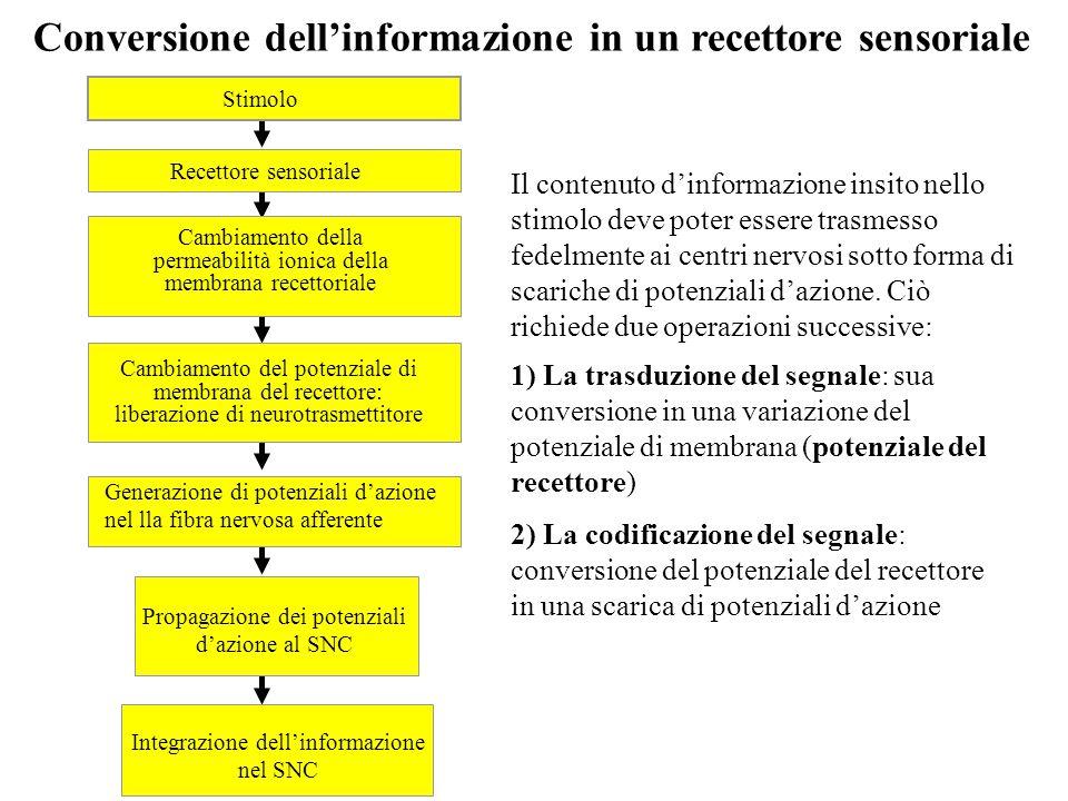 Conversione dell'informazione in un recettore sensoriale